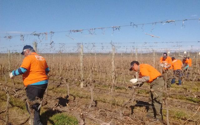 Poda, concurso & herramientas en Argentina: una experiencia en la vid por BAHCO