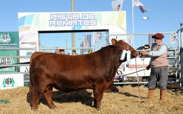 Agroactiva 2017 - Muestra ganadería y granja