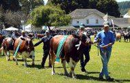SagoFisur 2017 – Chile – Sector forestal, agropecuario y ganadero