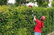 3 herramientas recomendadas para el mantenimiento del jardín